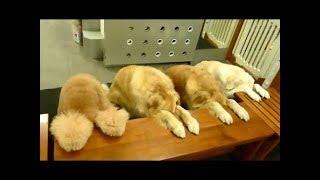 Смешные собаки ждут команды перед едой Видео подборка NEW