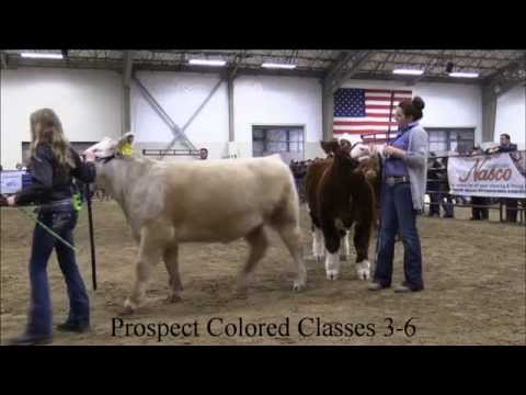 MJC Winter Cattle Classic: Prospect Colored Classes 3-6