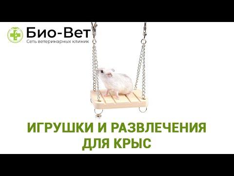 Как сделать игрушку для крысы