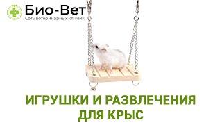 Игрушки и развлечения для крыс