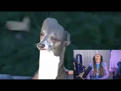download Reacting To Your Memes (Meme � Review �)