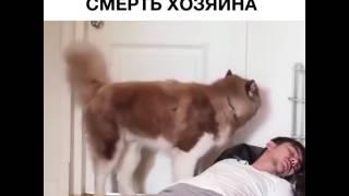 реакция собаки на смерть хозяина