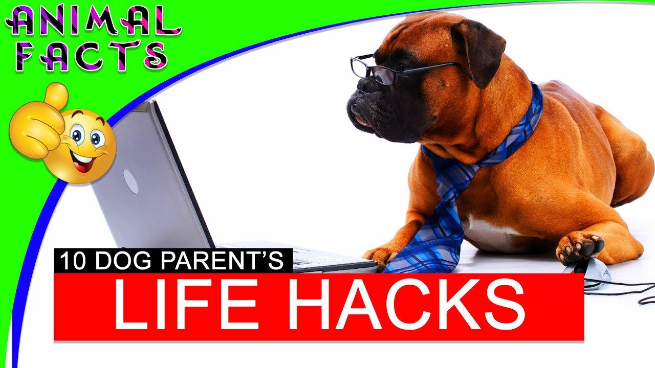 10 Life Hacks for Dogs - Dogs 101 - Animal Facts