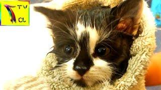 Котенок застрял в липучке от мышей. Купаем кошку .