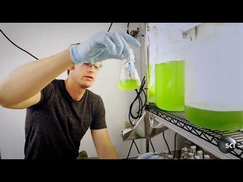 Algae Fuel Could Change the World | World's Strangest