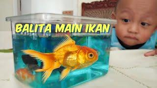 Balita Lucu Rex beli ikan hias & aquarium mini di Pasar