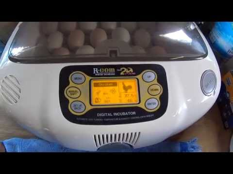 Amazon.com : R-Com RCOM King Suro 20 Fully AUTOMATIC Digital Egg .