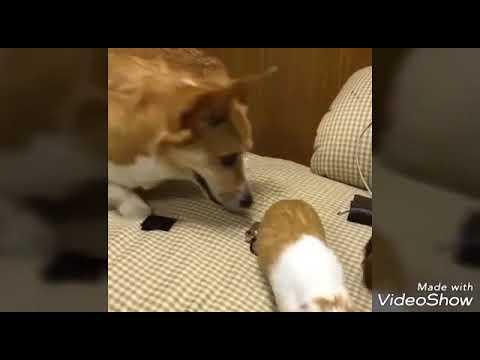 Ржака-моржака: смешные животные зажигают!