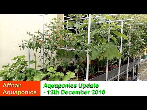 Affnan's Aquaponics - Update 12 Dec 2016