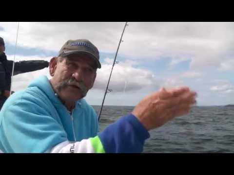 How To Catch Kingfish - SHIMANO FISHING