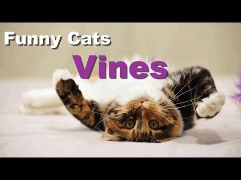 New funny cats Vines Compilation 2015