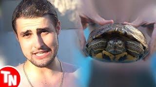 RezendeEvil coloca tartarugas na piscina e vira alvo de críticas