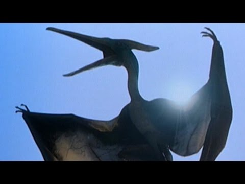 Dinosaurs Still  Alive Today - 5 Prehistoric Creatures That Didn't Go Extinct