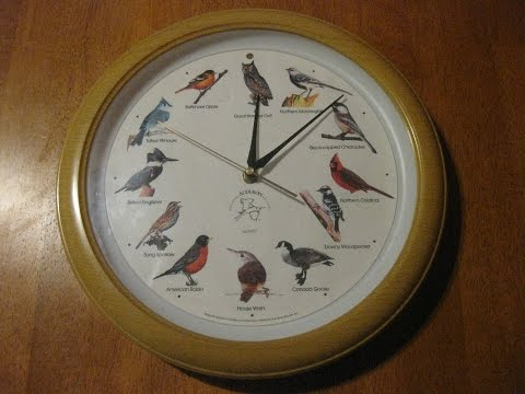 Singing Bird Wall Clock  Dark Sensor National Audubon Society 13 Chirps On Hour