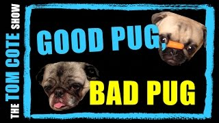 What a Pug is good for