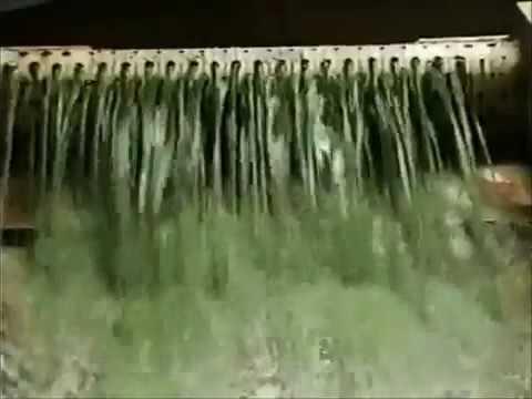 Cultivo y Producción de Alga Spirulina