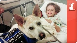 Healing Power of Pets - Seizure Detecting Dog assists boy