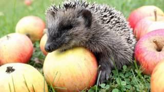 Самые забавные и смешные фото животных