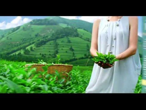 Чай Принцесса Ява, зеленый, 100 пакетиков по 2г 977880