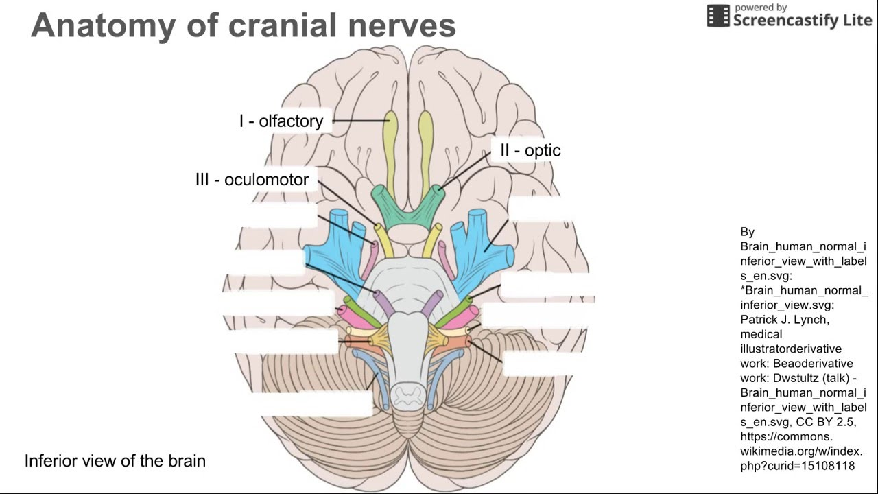 hight resolution of label nerve diagram