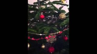 Шелдон лезет на елку