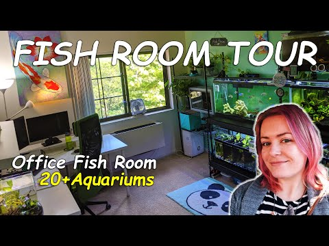 Her Office *Fish Room* Will Blow You Away! 20+ Aquariums For Breeding