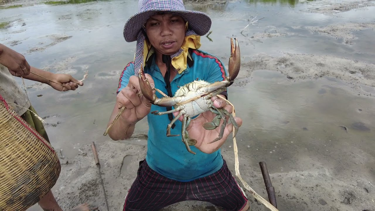 Season Fishing Sea Crab - Catch Many Mud Crabs In Muddy at Swamp Near The Sea after Water Go Down