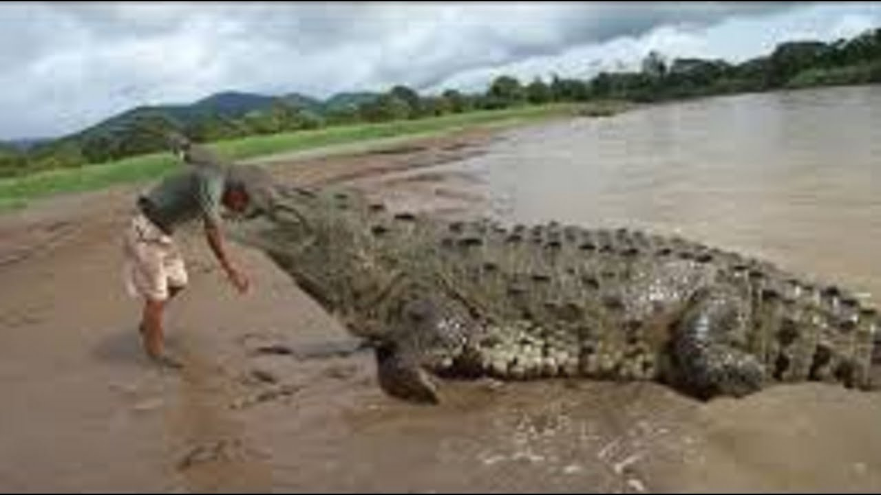 Crocodile vs alligator fight - photo#26