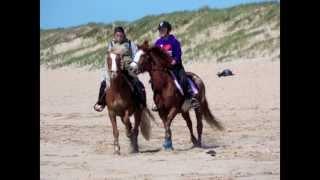 Equitation : un galop à la plage, on en rêvait !