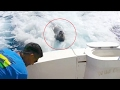 Seals, sea lions and walruses: Sea lion chases boat to get fish; Seals in Antarctica - Compilation