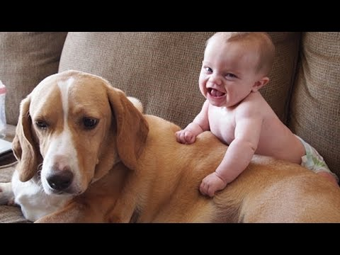 Babies Annoying Dogs – Cute And Funny Baby & Dog Compilation
