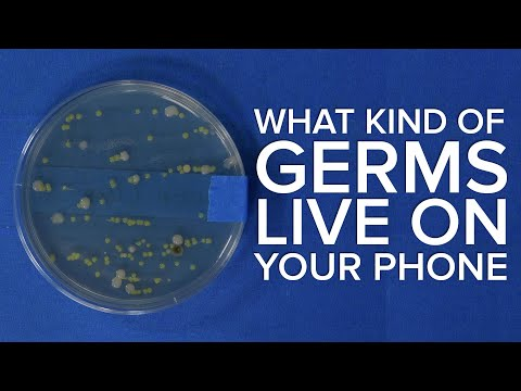Meet the Germs Living on Your Phone! Then Learn How to Kill Them!