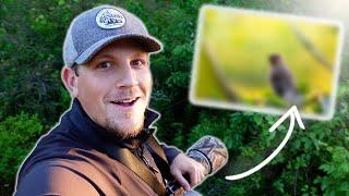 BIRD Photography | Stunning Cedar Waxwings | a1 + 200-600