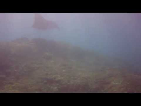 Diving Bali - Giants cleaning on Manta Point