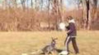 Winter Disc Dog Training......2008 Edition!