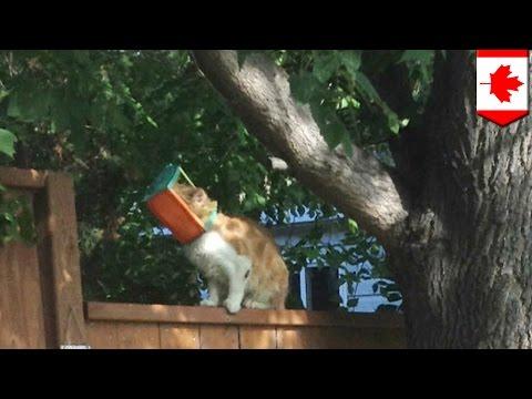 ネコの救助活動を邪魔する男