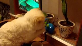 Кот играет с вентилятором