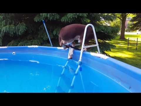 preston the thin blue line dog swimming and retrieving dog training 2017 houston tx