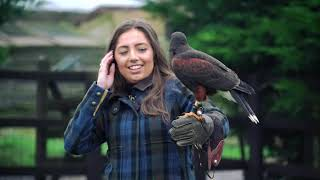 English Style Driven Pheasant Shoot & Falconry Experience Royal Outfitters UK Interview