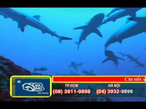 Vi cá đại dương