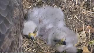 WDC Eagle Cam 06 05 18