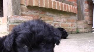 Frank Black - Dog Sleep