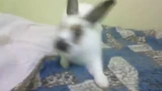 Как кролик убегает от хозяина
