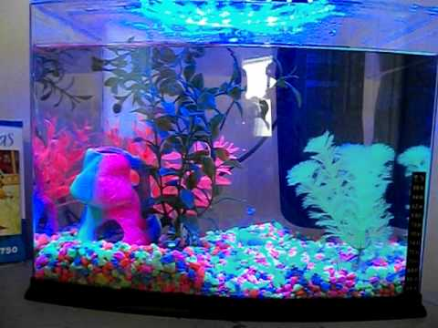My glofish 3 gallon tank - YouTube 10 Gallon Fish Tank Ideas