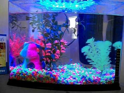 Glofish Tank My glofish 3 ga...