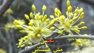 Arabic Karaoke Player LMS 9000محمد حماقي كاريوكي رسالة