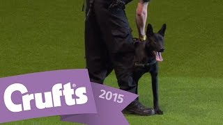 West Midlands Police Dog Display   Crufts 2015