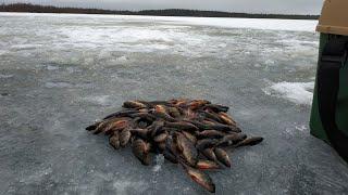 Осторожно рыбалка Бешеный клёв окуня Рыбачим на озере с Сашей Ивановым