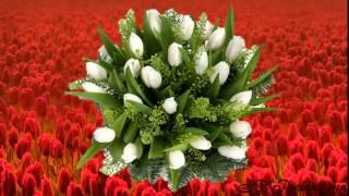 С Днем Рождения! Поздравления С Днем Рождения! В подарок тюльпаны