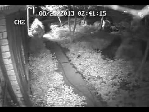 Johnston Crime Gang Caught RedHanded